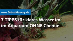 7 Tipps für klares Wasser OHNE Chemie