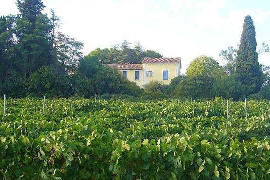 Le Domaine du Siestou vue des vignes