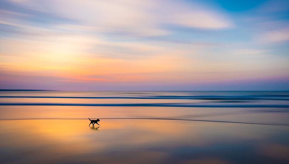 ADV_Dog Day Afternoon.jpg