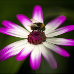 ADV_Busy Bee_889210.jpg