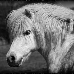 ADV_Wild Pony_888780.jpg