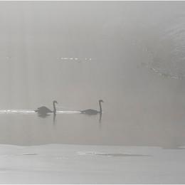 ADV_Swan Lake_867178.jpg