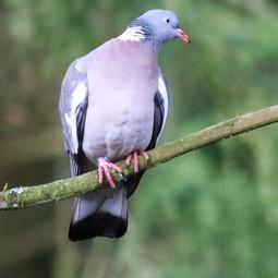 IMP_Resting Bird_887570.jpg