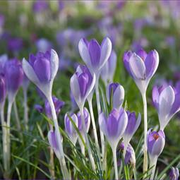 IMP_Signs of Spring_889451.jpg