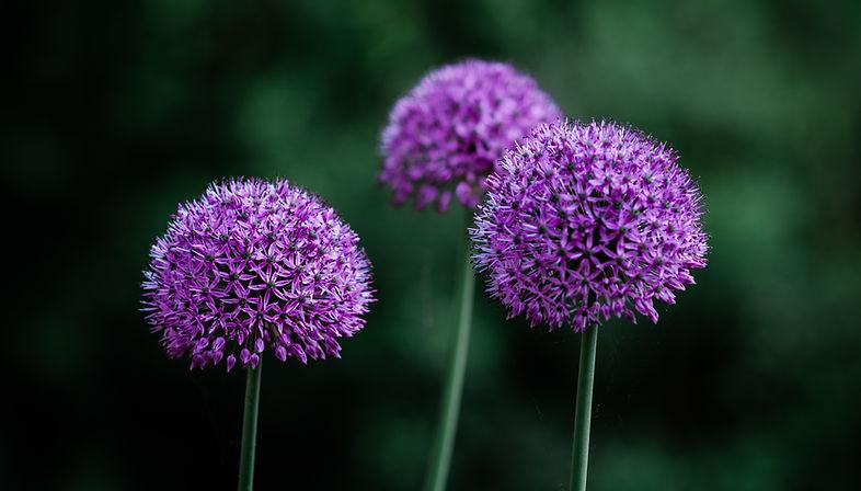 Flowers-5.jpg