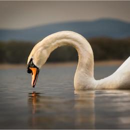 ADV_Swan Lake_867220.jpg