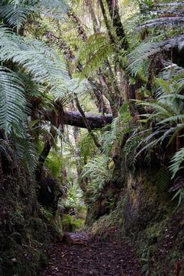 Stewart Island, New Zealand