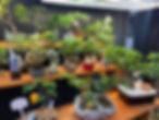 bonsai for sale 1.jpg