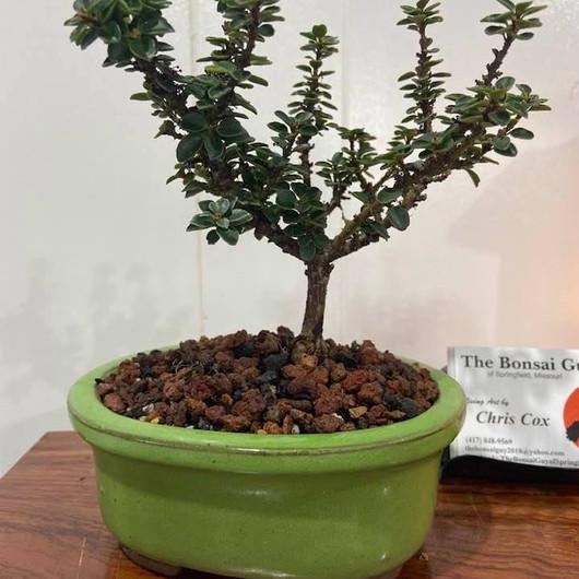 Triple J Holly oval green pot 1.jpg
