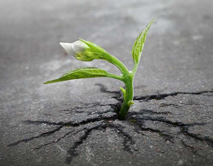 A natureza (você) encontra o seu caminho!