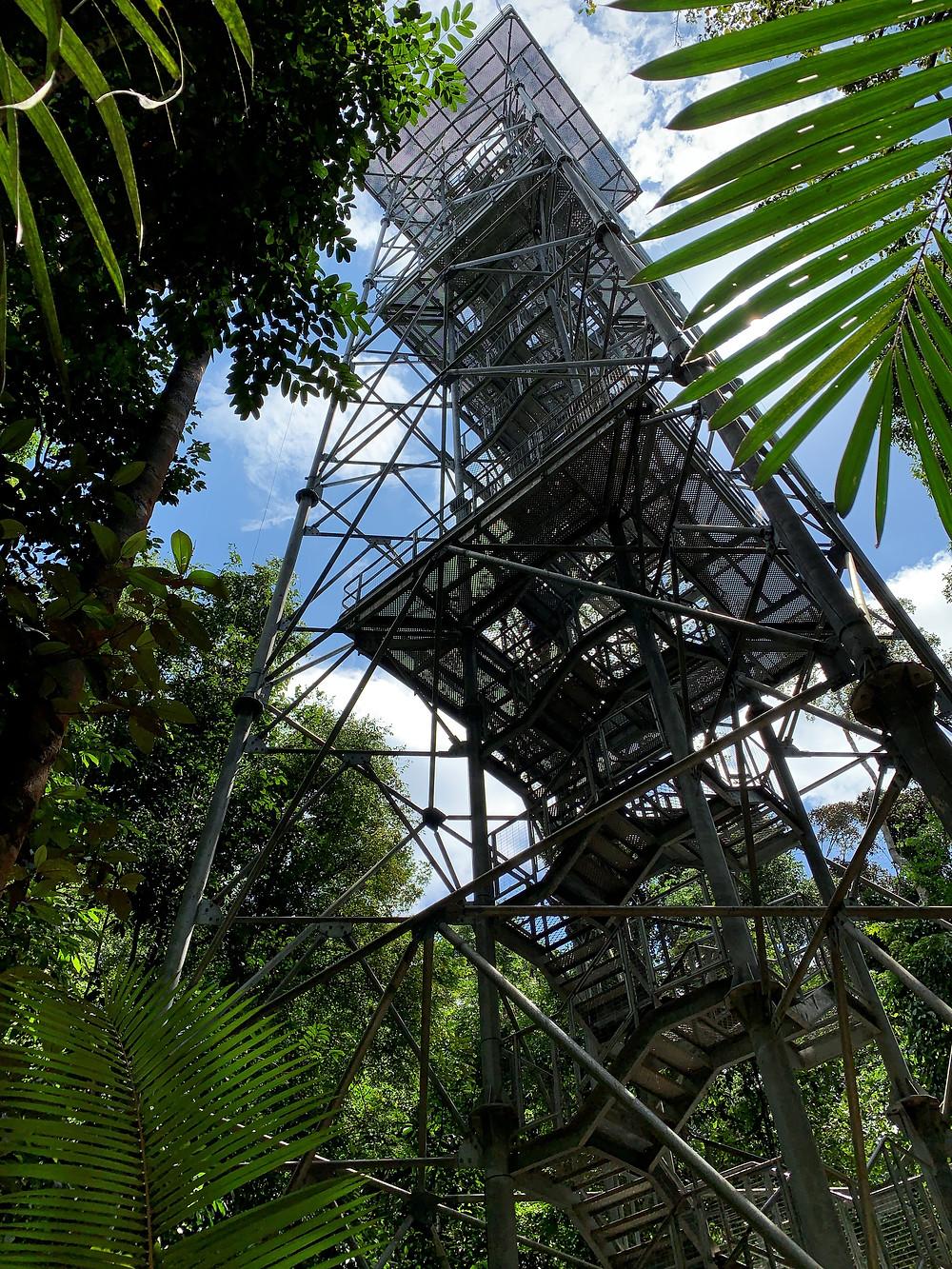 Musa | Museu da Amazônia | Jardim Botânico de Manaus | Reserva Adolpho Ducke]