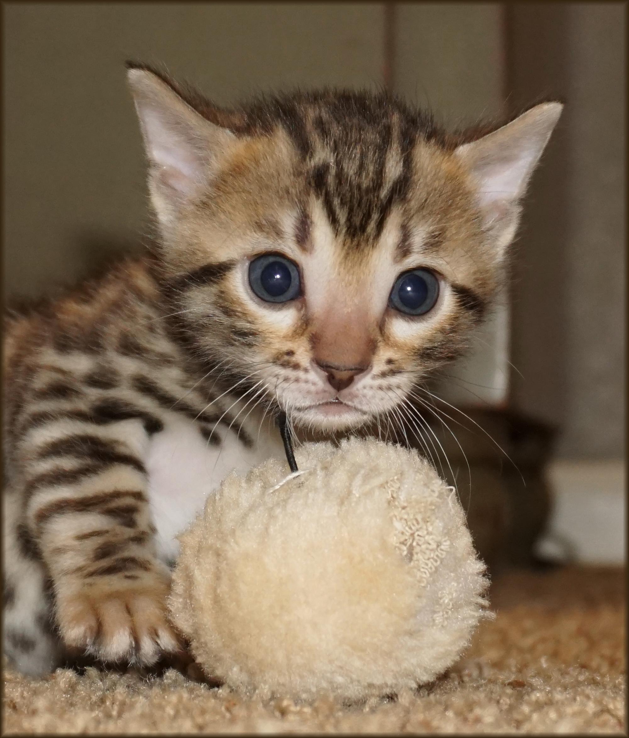 Cheetahsden Leia