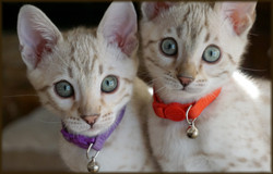 Cheetahsden Kreeci and Sister