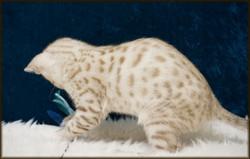 Cheetahsden Ice