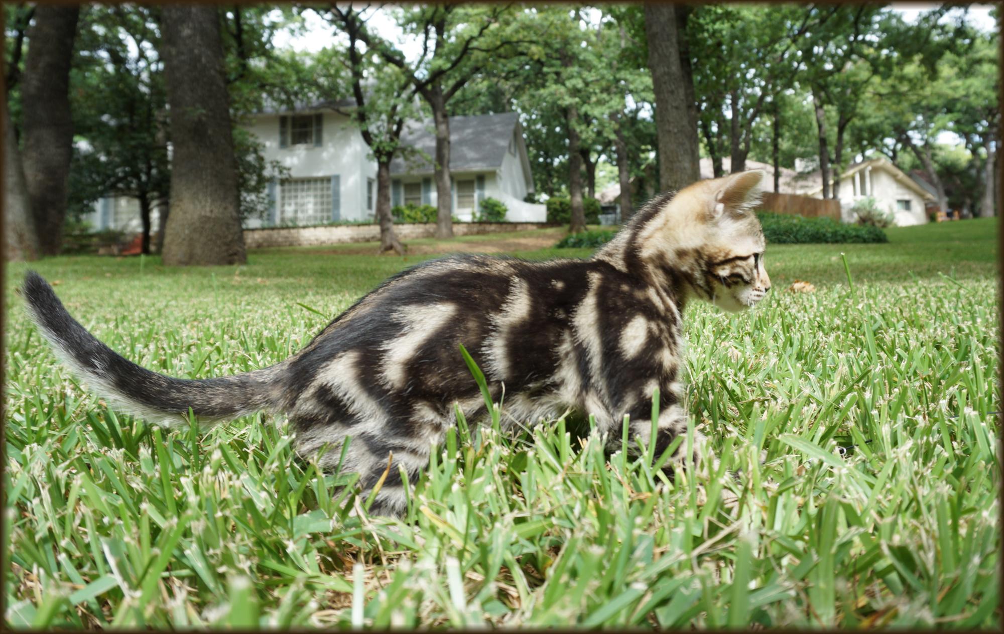 Cheetahsden Naomi