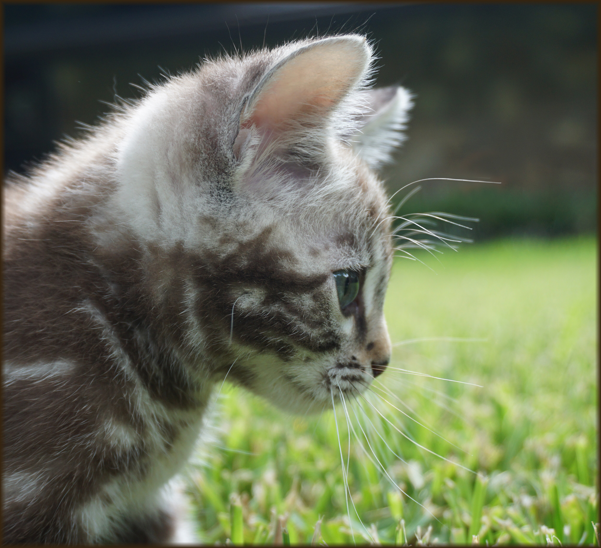 Cheetahsden Sandler