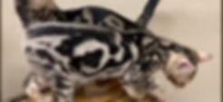 bahiyamarble1.jpg