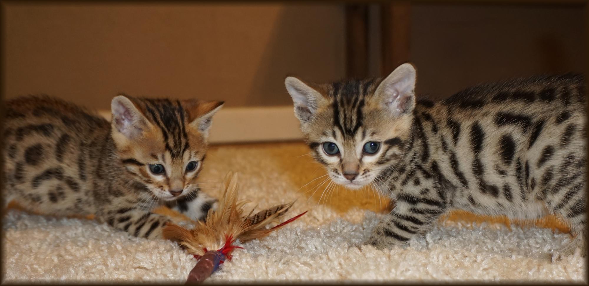 Cheetahsden Zak and Cheetahsden Zeek