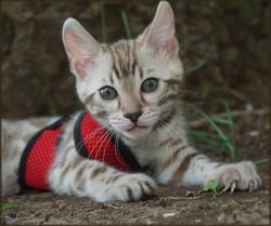 Cheetahsden Kilala