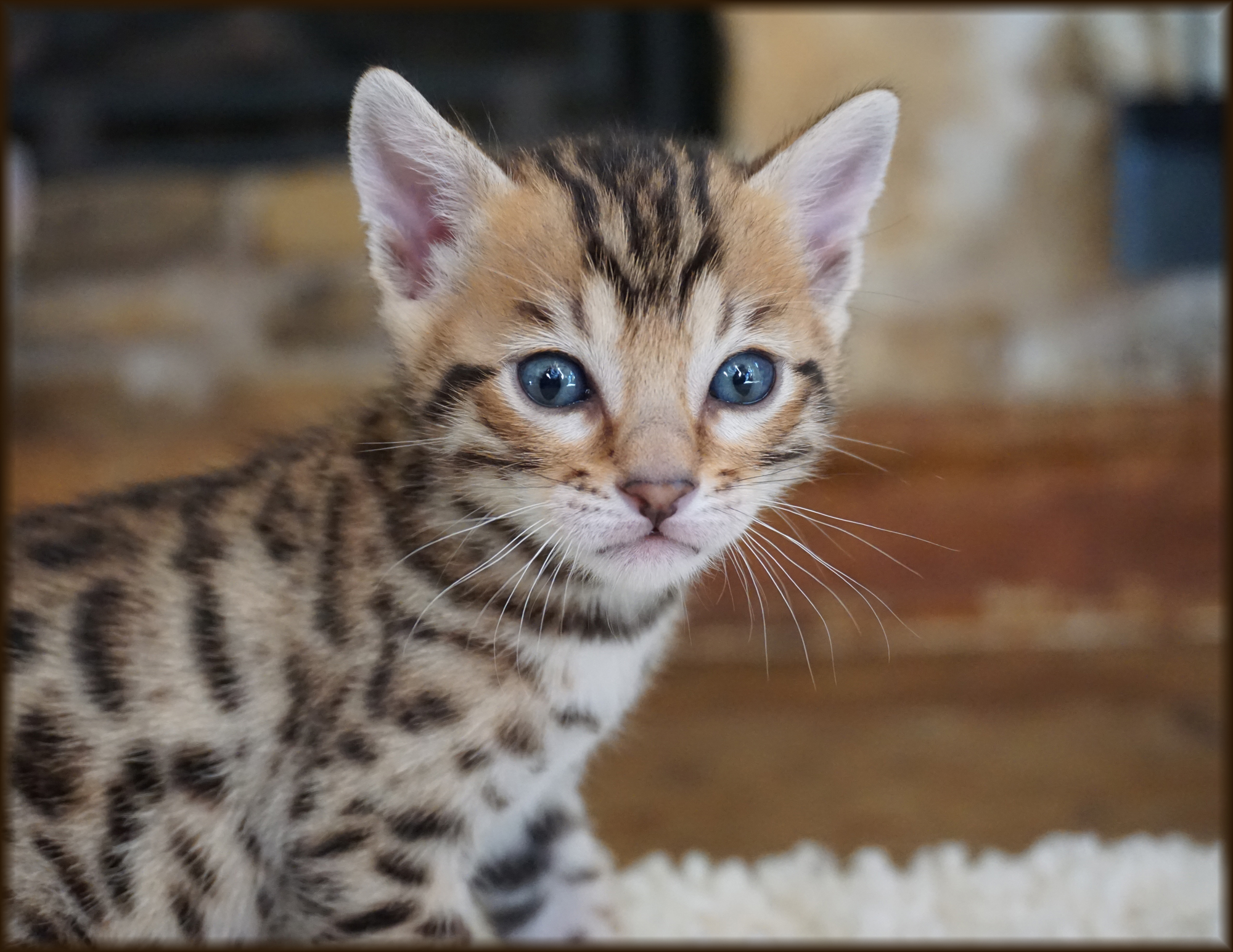 Cheetahsden Zeek