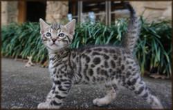 Cheetahsden Mopar