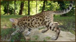 Cheetahsden Kobe