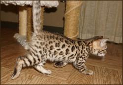 Cheetahsden Vienna