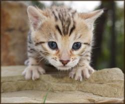 Cheetahsden Halohsden Eve