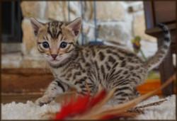Cheetahsden Lumaden Genie