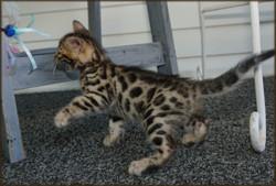 Cheetahsden Iverson