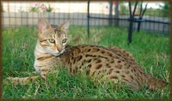 Cheetahsden Tsiara