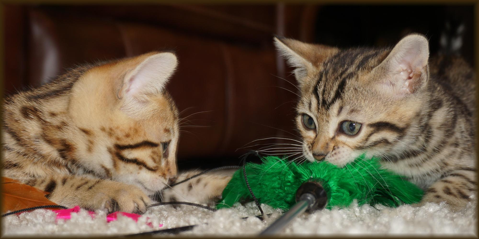Cheetahsden Zeek and Cheetahsden Zak