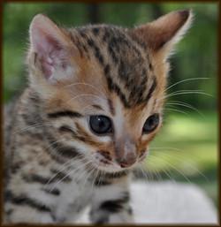 Cheetahsden Teriyaki