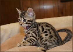 Cheetahsden Li Ming