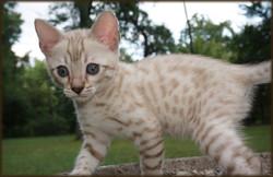 Cheetahsden Conrad
