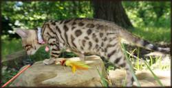 Cheetahsden Eden