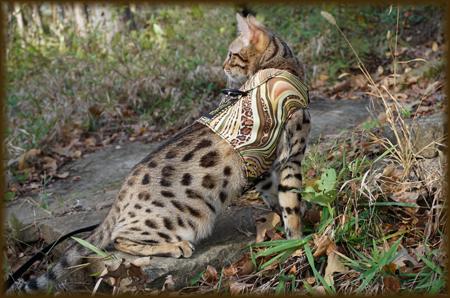 Cheetahsden Lovelettah
