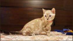 Cheetahsden Yukina