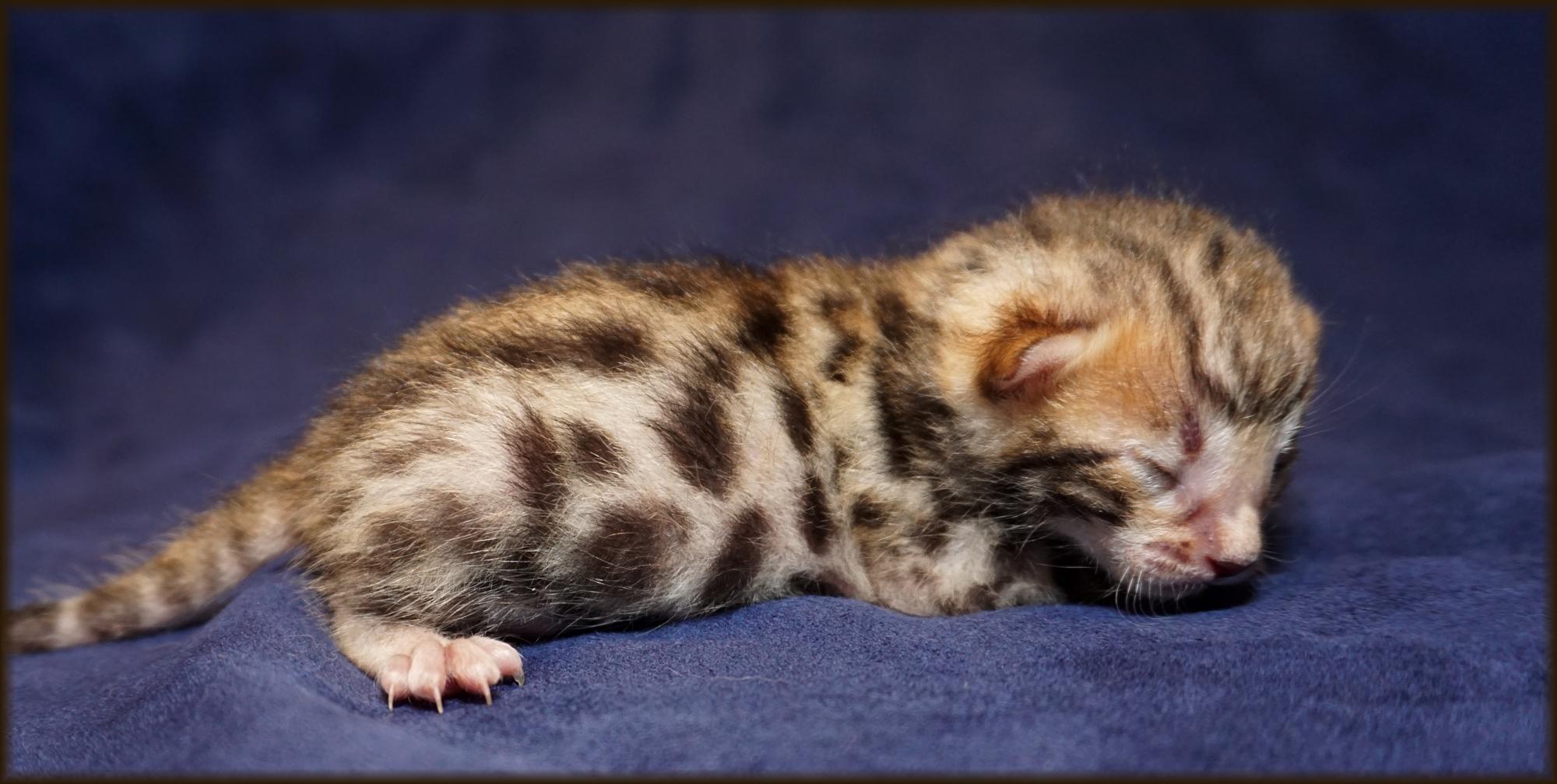 Cheetahsden Denver