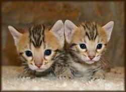 Monkey Babies