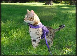 LA IW SGC Leopardcats Tao Tao