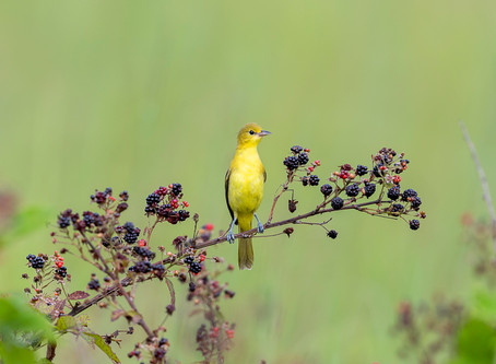 Back to Birding