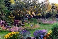 20200709_203250 Summer back garden.jpg