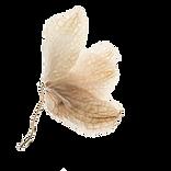 dreidflower1.png