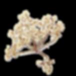 driedflower1.png
