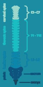 cervial-spine-149x300.png