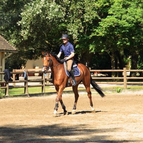 L'importance des exercices de renforcement musculaire chez le cheval