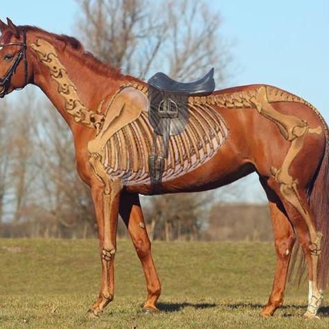 Ma selle est-elle bien adaptée à mon cheval ?