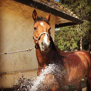 Comment protéger son cheval lors de canicules?