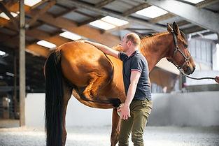 ostéopathie pour animaux cheval sport